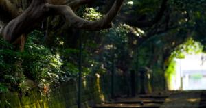 キャンピングカー|レンタル|RVパークあじがうら|RVパーク|ひたちなか市|阿字ヶ浦温泉のぞみ|那珂湊おさかな市場|ウニ|海鮮|酒列磯前神社の樹叢