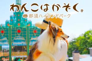キャンピングカー|レンタル|RVパーク|栃木県|那須高原|ホテル・フロラシオン那須|温泉|那須ハイランドパーク|渓流体験|ニジマス|犬保護活動