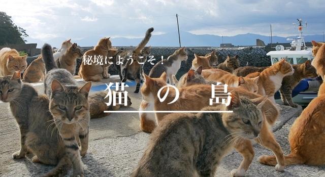 キャンピングカー|レンタル|旅|愛媛|青島|離島|猫|癒し|船|漁港|秘境